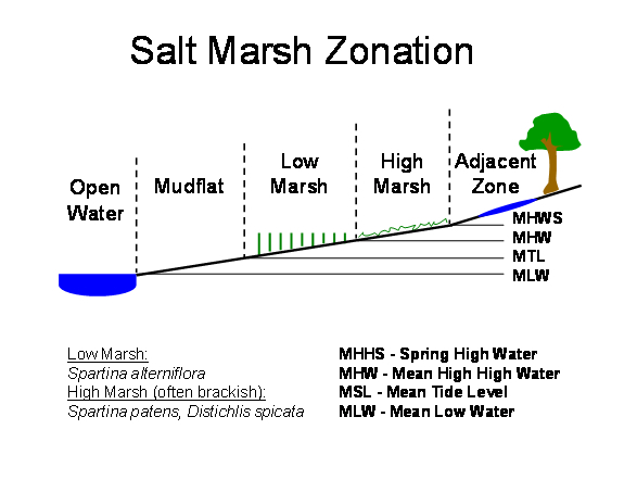 Example of Salt Marsh Zonation